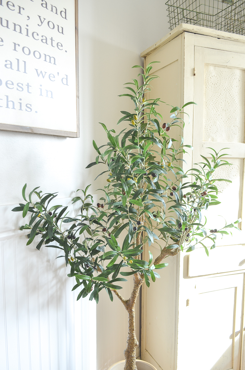 Olive tree in the dining room