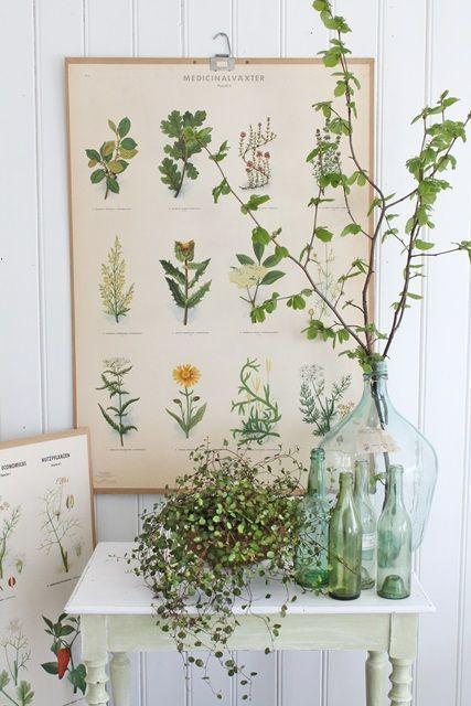 Vintage inspired botanical prints